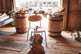 cello-363