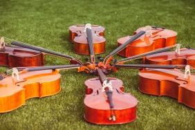 cello-186