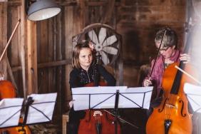 cello-386